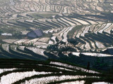Wet Rice Is Grown in Terraced Mountain Valleys of Northern Vietnam  Sapa  Lao Cai  Vietnam