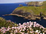 Wildflowers on Rugged Cliffs  Tintagel  Cornwall  England