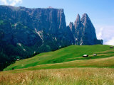 Alpine Meadow with Sciliar Peaks  Dolomites  Italy