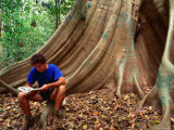 Scientist on a Buttress Root in the Rainforest  Lockhart River Aboriginal Community  Australia