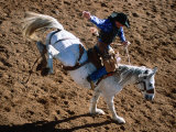 Bronco Rider at Cloncurry Rodeo  Cloncurry  Queensland  Australia