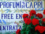 Ceramic Tiles Advertising Entrance to Perfumery  Capri Town  Capri  Campania  Italy