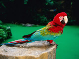 Colourful Parrot at Jurong Bird Park  Singapore