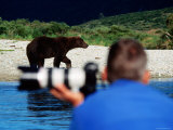 Brown Bear and Photogrpaher along Shelikof Strait  Katmai National Park  Alaska