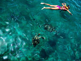 Snorkelling with Sea Turtles  Tiami Catamara Cruise  Folkstone Marine Reserve