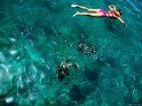 Snorkelling with Sea Turtles  Tiami Catamara Cruise  Folkstone Marine Reserve