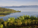 Crops Cultivated on Shores of Lake  Lake Kivu  Gisenyi  Rwanda