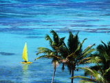 Hobie Catamaran with Coconut Trees in Foreground