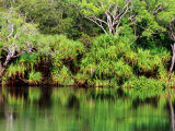 Mardugal Billabong  Kakadu National Park  Northern Territory  Australia