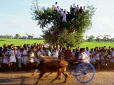 Bullock Cart Race  Madurai  Tamil Nadu  India