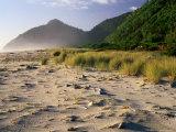 Bleached Pieces of Driftwood on the Beach at Kohaihai  Karamea  New Zealand