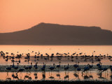 Flamingos Silhouetted in Lake Abiata  Abiyata-Shala National Park  Oromia  Ethiopia