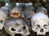 Decoration Sits on One of Many Skulls on Display at Killing Fields  Phnom Penh  Cambodia