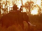 Eco-Tourists Riding Elephant  Royal Chitwan National Park  Narayani  Nepal
