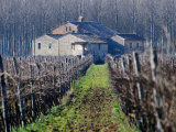 Winery Vines and Buildng  Torgiano  Umbria  Italy
