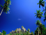 Palm Trees and Sky  Bora Bora  the Society Islands  French Polynesia
