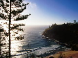 Anson Bay with Norfolk Island Pines  Australia