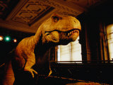 Tyrannosauraus Rex at Natural History Museum  London  Greater London  England