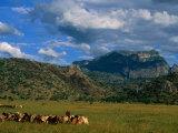 Karamojong Pastoral Land on Plains Below Mount Kadam  Uganda