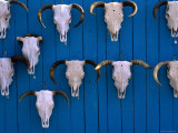 Animal Skulls on Wall  New Mexico