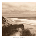 Wellfleet Dune