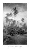 Coconut Grove  Lahaina  1910