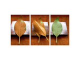 Leaves Arrangement Triptych