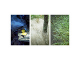 River&#39;s Edge Triptych