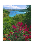 Tropical Colors of Saint John  US Virgin Islands