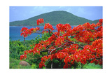 Tropical Colors  Culebra  Puerto Rico