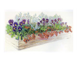 Pansies in a Box