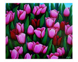 Bridgets Tulips