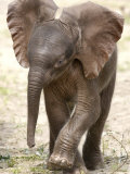 Baby Elephant's First Public Appearance  Zoo of Berlin  Berlin  Germany