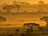 Herbivores at Sunrise  Amboseli Wildlife Reserve  Kenya
