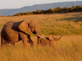 Elephant and Offspring  Masai Mara Wildlife Reserve  Kenya