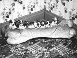 Pups and Bones  Goshen  Indiana  c1953