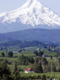 Mount Hood over Houses Scattered amongst Orchards and Firs  Pine Grove  Oregon