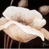 Amazing Poppies II