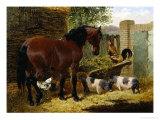 Friendly Farmyard