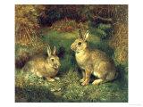 Lapins Giclée par Henry Carter
