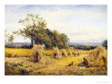 Worcestershire Cornfield