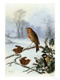 Christmas Robin and Friends