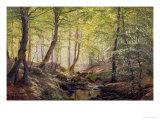 Forest Glade  Springtime