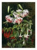 Rubrum Lilies and Fuchsias