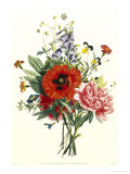 Bouquet of Foxglove  Poppy and Peonie