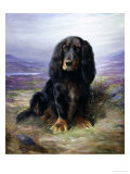 Spaniel in the Highlands