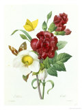 Botanical Study of Hellebore