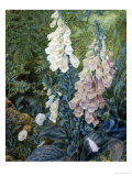 Still Life of Foxgloves