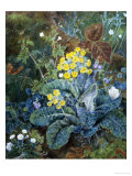 Still Life of Polyanthus and Butterfly