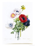 Anemone Simplex